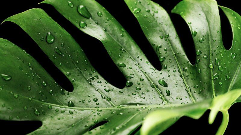 Lättskötta gröna växter i hem och trädgård